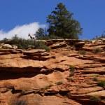 Rocky Mountain sheep  against bright blue sky — Stock Photo #44794867