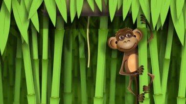 Monkey — Stock Video