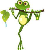 Frog on a branch — Stock Vector