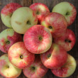 Apples — Stock Photo #29422075