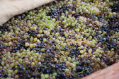 Winemaking — Stock Photo