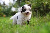 Puppy — Стоковое фото