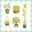 Illustration of Home Plants — Stock Vector
