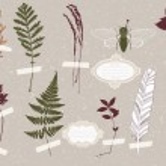 Herbarium and Cicada — Stock Vector #39144379