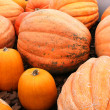 Large Orange Pumpkins — Stock Photo