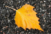 Autumn Yellow Leaf on Road — Stock Photo