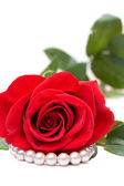 Red Rose and Perls on White — Photo