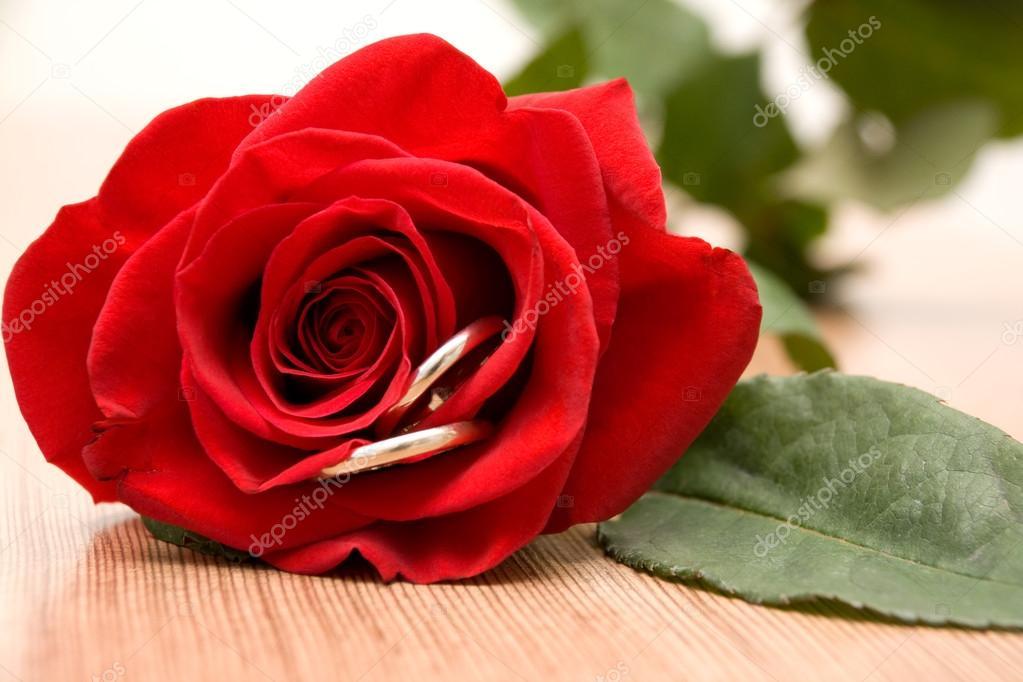 Fedi nuziali e rosa rossa — Foto Stock © Kitigan #40138481