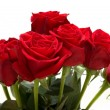 Bunch of Red Roses — Stockfoto