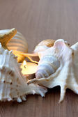 Burning Candle and Seashells — Stock Photo