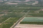 Groene platteland velden — Stockfoto