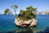 Pine Tree on Rock Island — Stockfoto