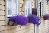 Las ventanas decoradas — Foto de Stock