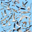 Stock Photo: Marine gulls
