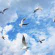 Group of sea gulls — Stock Photo