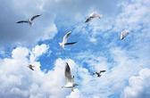 Group of sea gulls — Stock Photo