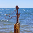 Stock Photo: Barbed wire and blue sea