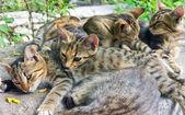 кошки — Стоковое фото