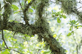 Moss on a tree — Stock Photo