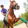 Horsewoman — Stock Photo #13303673