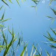 Beautiful fresh green grass against the blue sky in view frame — Stock Photo
