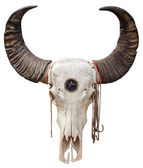 Cráneo de búfalo — Foto de Stock