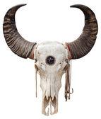 Buffalo skull — Stock Photo