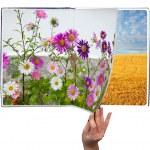 四季折々 の本 — ストック写真
