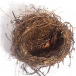 Nest — Stock Photo #40029499