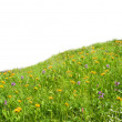 Flowers meadow — Stock Photo