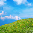 Meadow with wildflowers — Stock Photo