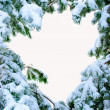 Snow covered fir branches. Christmas tree in snow. — Stock Photo