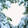 Snow covered fir branches. Christmas tree in snow. - Stock Photo