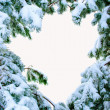 Stock Photo: Snow covered fir branches.