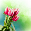 Tulips. Gift Card. — Stock Photo