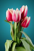 Tulips. bouquet of red flowers. — Stock Photo
