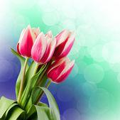 Tulips. Gift Card. — Stock Photo