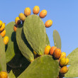 Prickly pear — Stock Photo #13761963