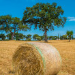 Sheaves of straw, Apulia region — Stock Photo