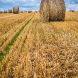 Land of sheaves — Stock Photo