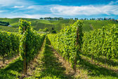 Vineyards along the Moselle river, Luxembourg — Stock Photo