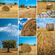 Puglia countryside — Stock Photo