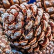Pine cones — Stock Photo #36413341