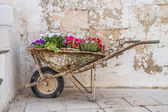 Old wheelbarrow with flowers — Stock Photo