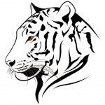 Vector tiger — Stock Vector #19090425