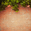 Grunge wall — Stock Photo #13554881