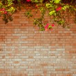 Grunge wall — Stock Photo #13554890