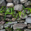 Grunge wall — Stock Photo #13554907