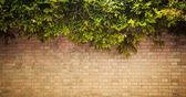 グランジの壁 — ストック写真
