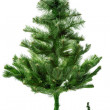 Christmas tree — Stock Photo #14472777